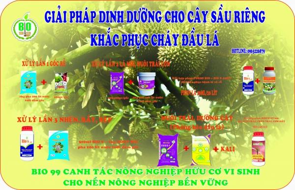 khong-che-sau-rieng-chay-dau-la-trong-mua-mua